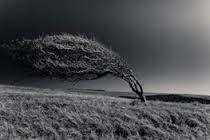 طوفان با سرعت بیش از ۷۰ کیلومتر در ساعت همدان را درنوردید