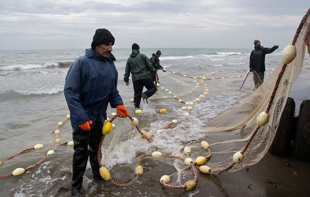 تصاویر   صید ماهی در میانکاله