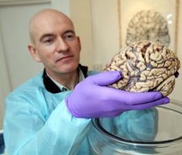 «اشتباه تایپی» که باعث بزرگ شدن مغز انسان شد!/نتایج تحقیقات جدید