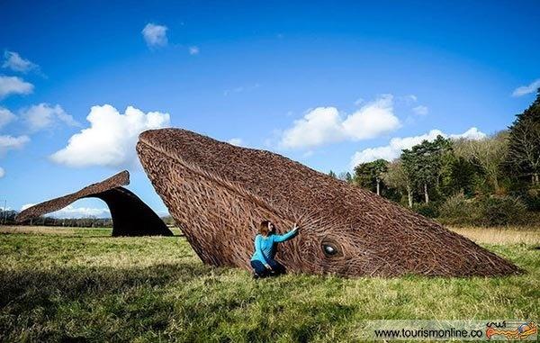 نهنگ چوبی دیدنی در انگلیس/ عکس