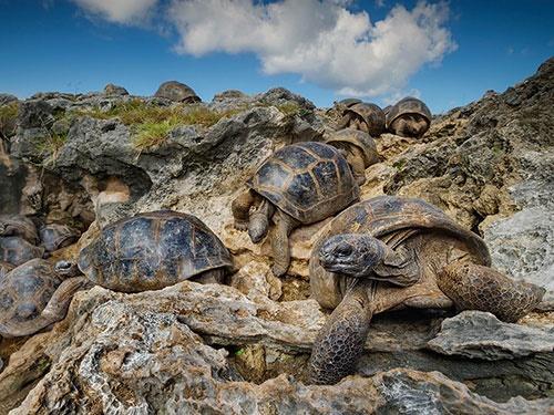 عقبنشینی لاکپشتها از گرما/عکس روز نشنال جئوگرافیک