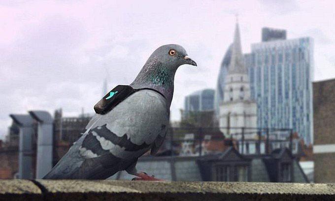 مأموریت جدید کبوتران لندنی / عکس