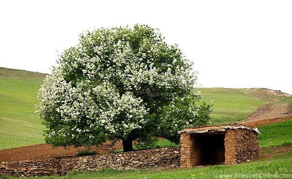 چرا هیچ جا، بهار کردستان نمی شود؟