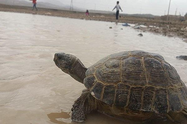 تالاب کجی شاهکار خیالانگیز خلقت در دل کویر
