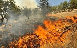 جلوگیری از تخریب محیط زیست با گزارش دهی مسافران نوروزی به مسئولان