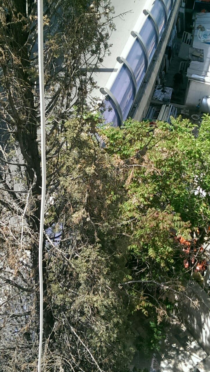 شکایت اهالی اطراف طبقه دوم اتوبان صدر: در فاصله نیم متری پنجره ما بزرگراه ساخته اند