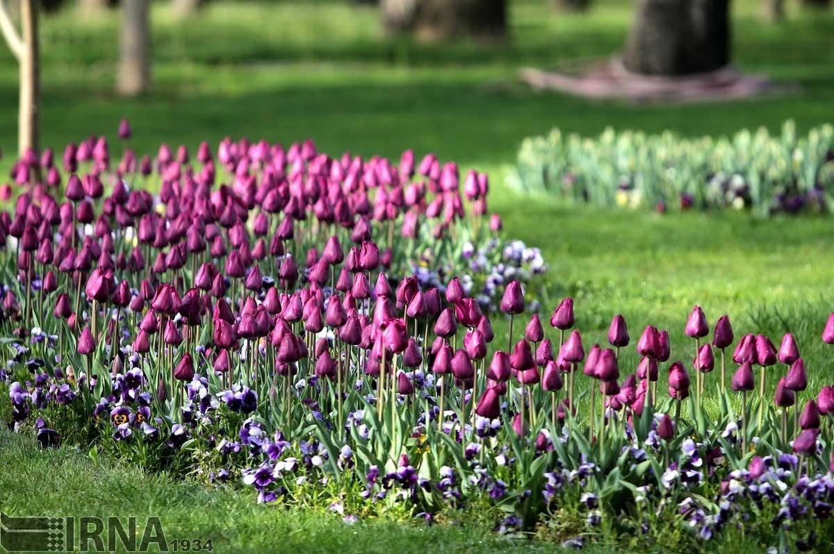 جشنواره گل های بهاری در بوستان ملت مشهد