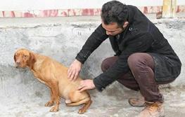 حکم شلاق و یک سال آموزش رفتار با حیوانات برای متهم سگکشی