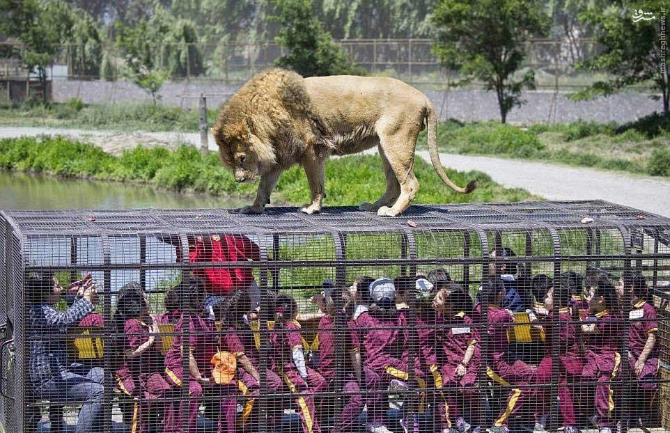 باغ وحشی که آدمها در قفس میروند
