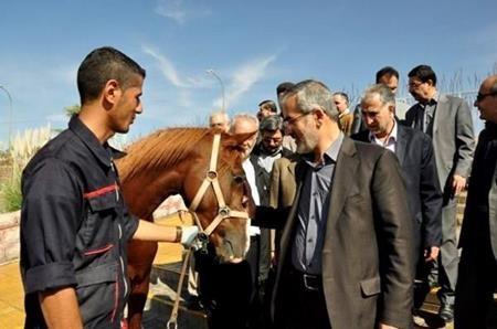 راه اندازی استودیوم سوارکاری در استان / بومی سازی صنعت پرورش اسب در البرز مصداق اقتصادمقاومتی