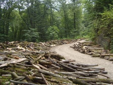 4 میلیارد هکتار جنگل در دنیا وجود دارد