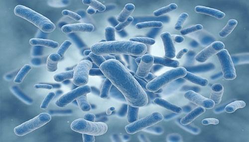 باکتریهایی که دیاکسید کربن را به قند تبدیل میکنند/تلاش برای حل بحران جهانی
