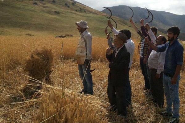 آئین سنتی شکرگزاری برداشت گندم «آللاه لاما» در گرمی برگزار شد