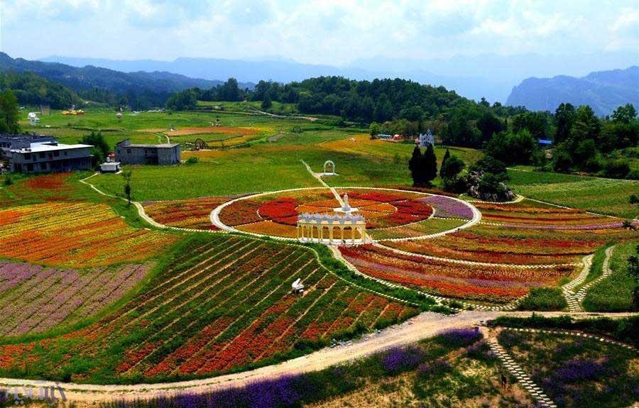 تصاویر   گلهایی که گردشگران را به یک روستای چین میکشاند
