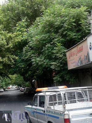 قطع شبانه درختان ادامه دارد/ در منطقه 12 تهران چه میگذرد؟