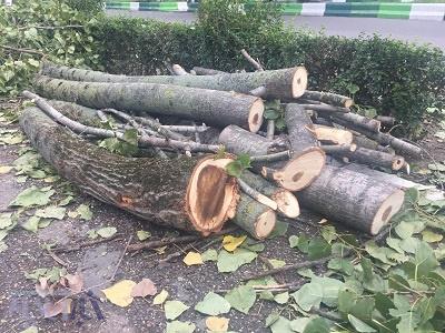 تخریب درختان در رشت ادامه دارد/ مسئولین پاسخگو باشند