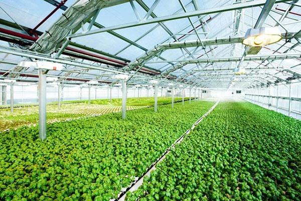 بزرگترین مزرعه پشتبامی جهان را ببینید/تبدیل فضای بلااستفاده برای تولید محصول