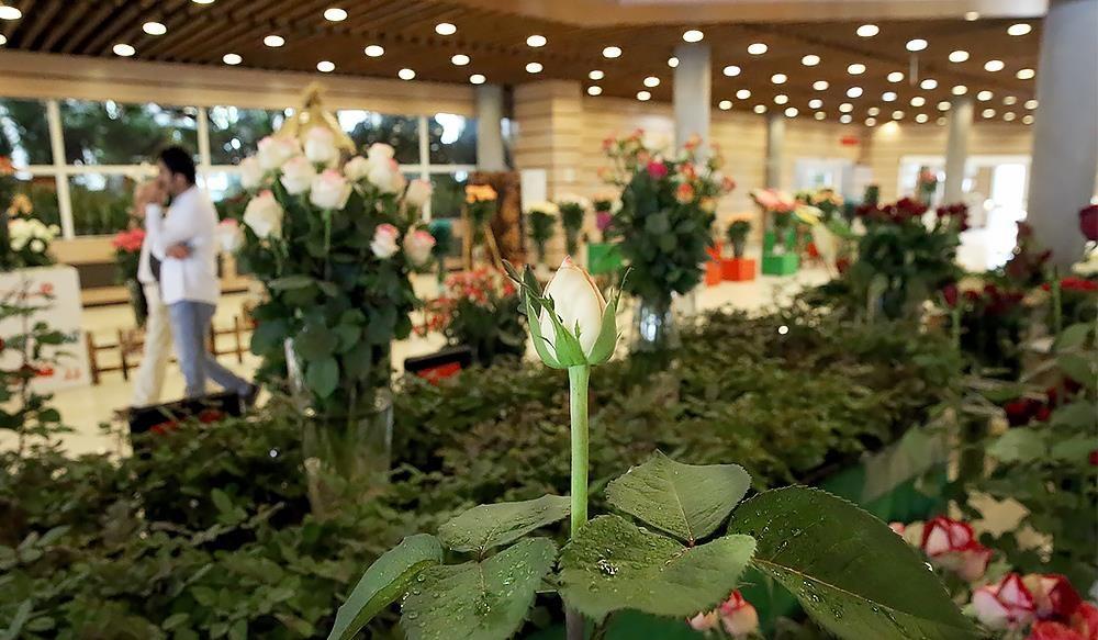 تصاویر | هشتمین نمایشگاه فصلی گل و گیاه تهران