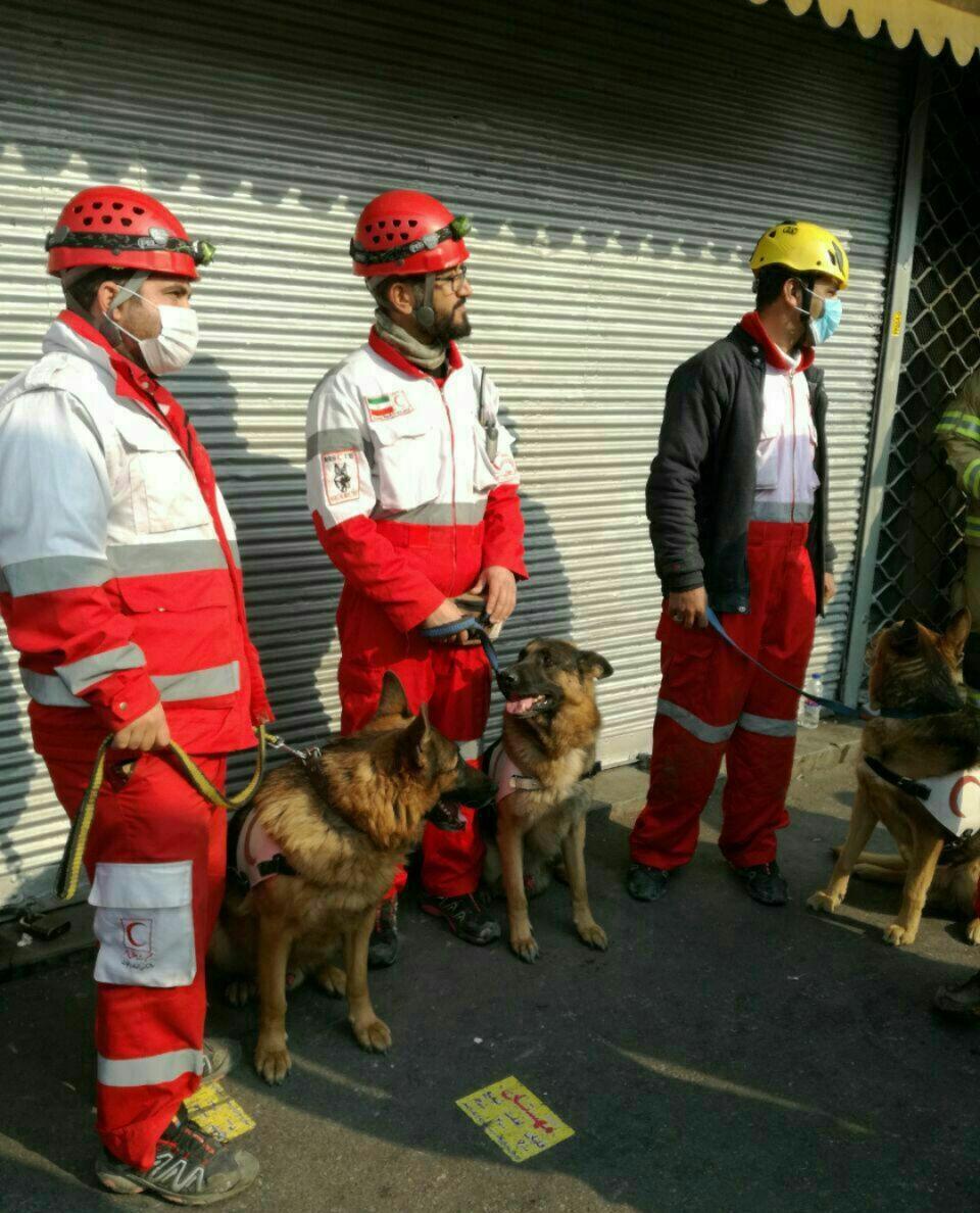 عکس | سگهای زندهیاب در محل ریزش ساختمان پلاسکو