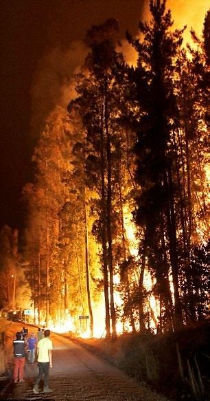 تصاویر | آتشی که در شیلی به فاجعه تبدیل شد | ۸۰ هزار هکتار جنگل در معرض نابودی