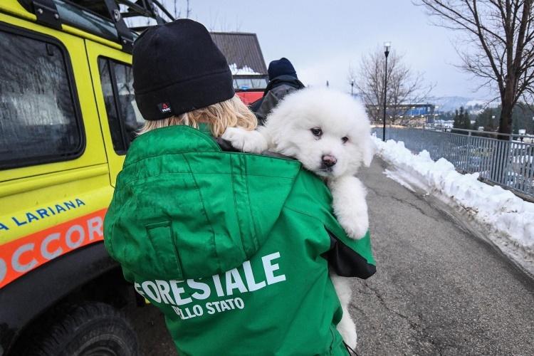 فیلم | کشف سه توله سگ زنده از زیر آوارهای هتل کوهستانی در ایتالیا