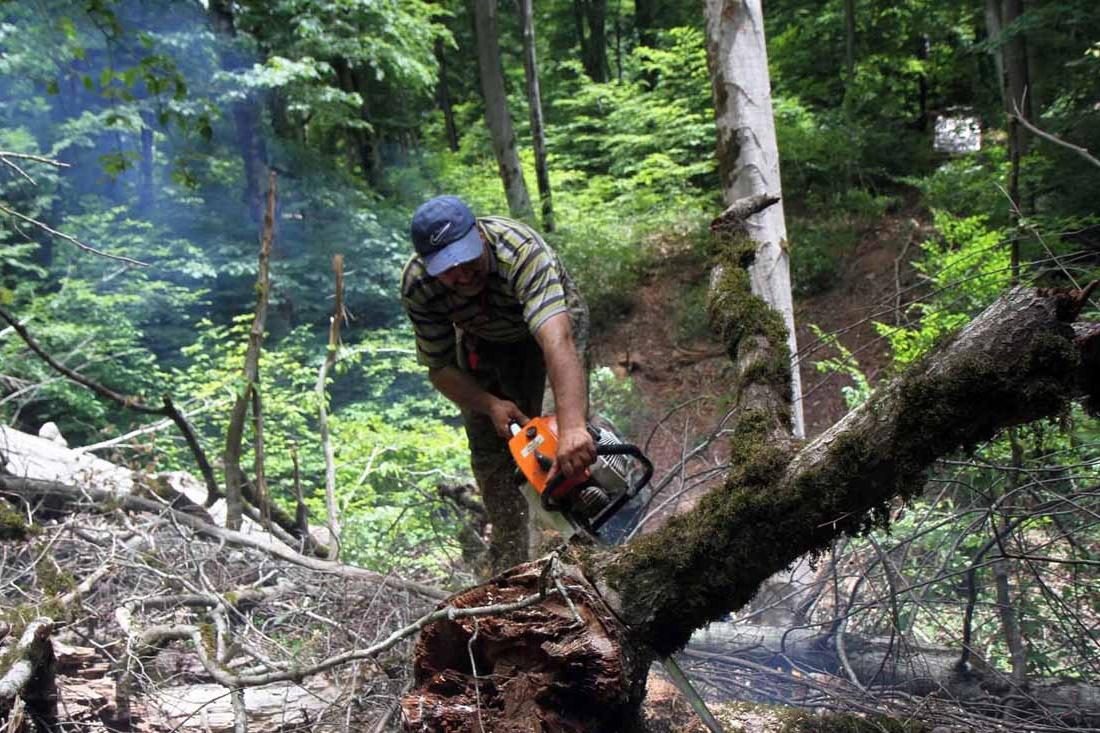 فیلم | باغدارانی که به دلیل رکود بازار درختان خود را قطع کردند!