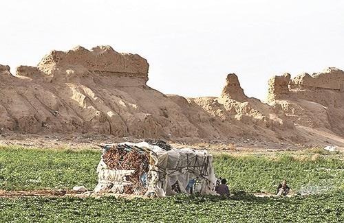 بزرگترین قلعه خشتی ساسانی در قرق کشاورزان /قلعه ایرج ورامین بهتازگی ترک برداشته/ عکس