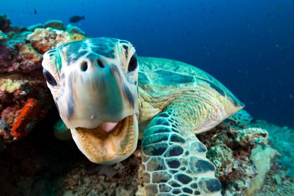 تصاویر | دنیای متفاوت حیوانات در اعماق اقیانوسها