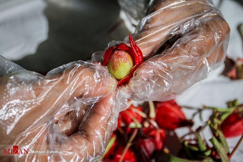 تصاویر | فصل برداشت در مزرعه چای ترش
