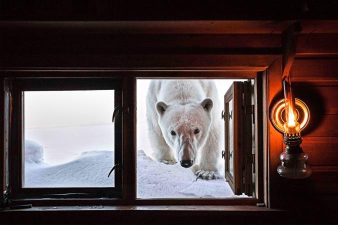 تصاویر | زندگی میان برف و یخ در مناطق قطبی