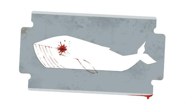 سواد رسانهای نداریم، نهنگ آبی قربانی میگیرد