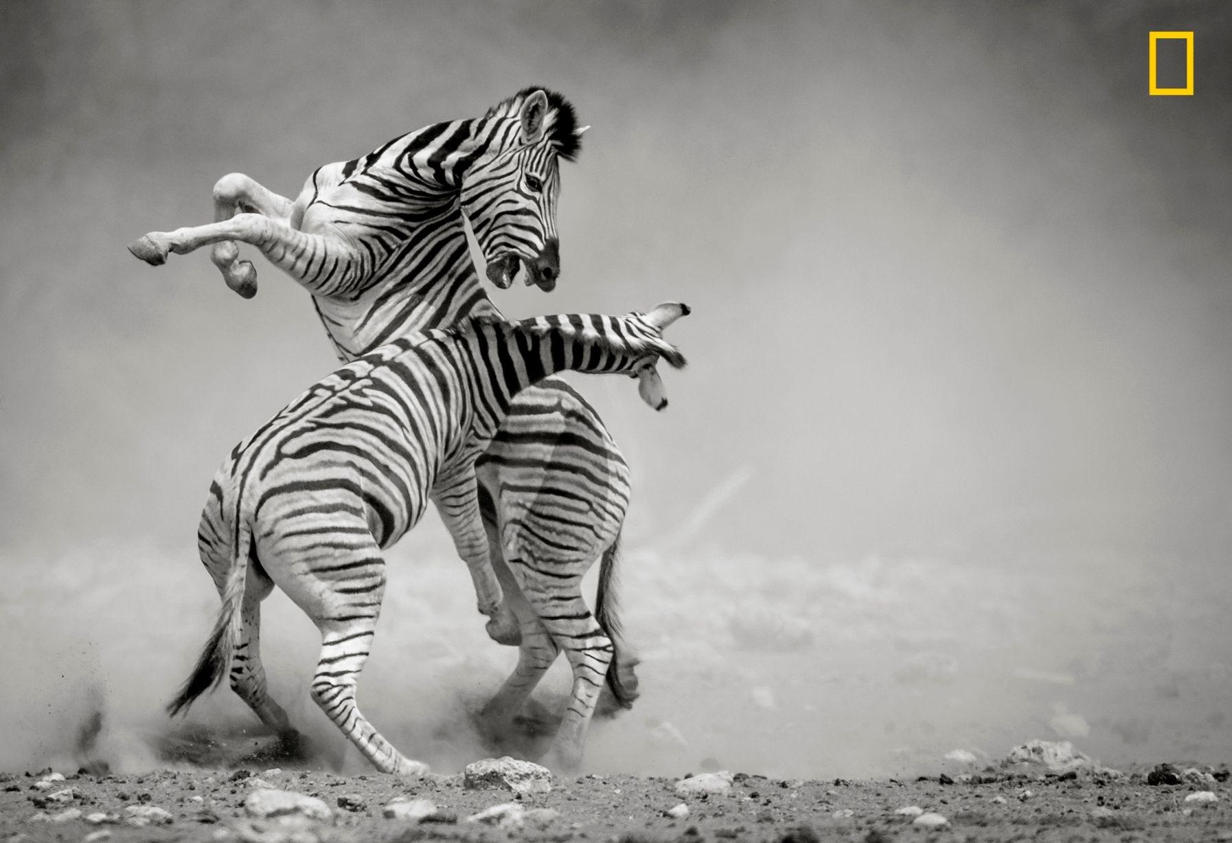 تصاویر | مناظر خیرهکننده طبیعت در میان برگزیدههای مسابقه نشنال جئوگرافیک