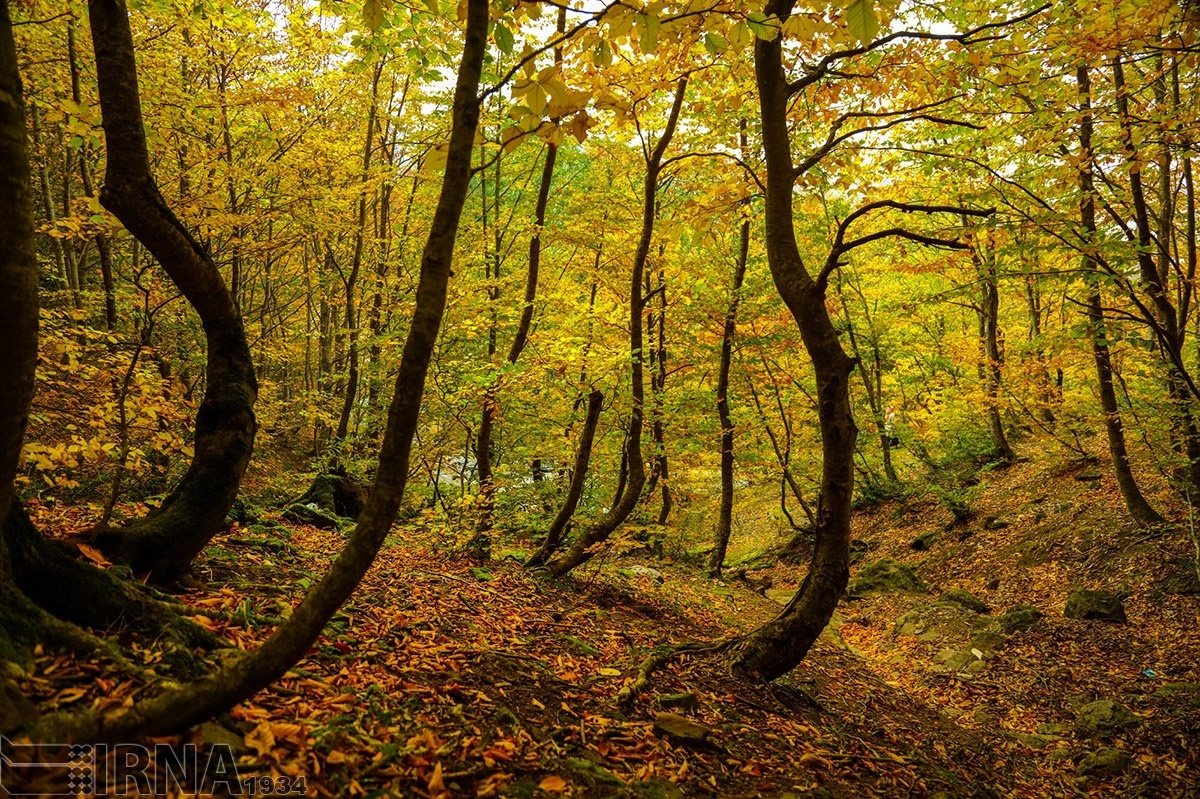 عکس های طبیعت پاییز