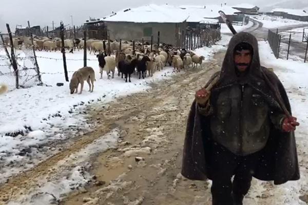 فیلم | بارش برف زودهنگام و کمبود علوفه برای چرای دامها در آستارا