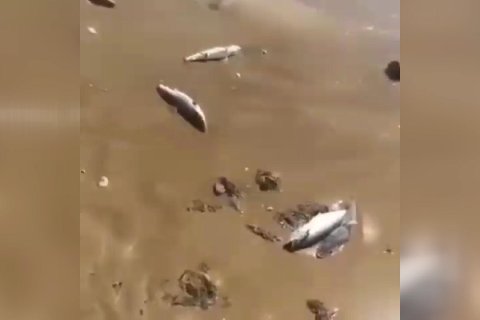 فیلم | لاشه دهها بچهکوسه با دُم بریده در ساحل کنگان و بوشهر