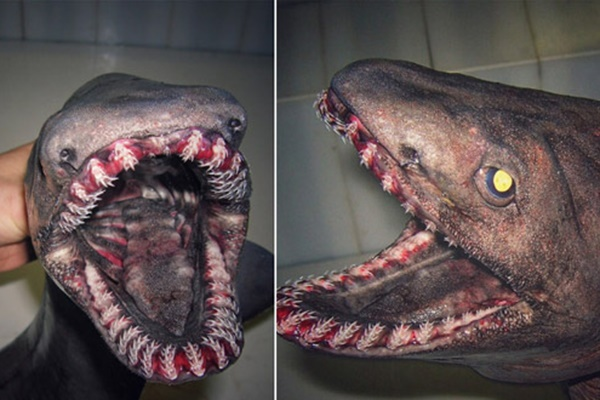 فیلم | کشف یک کوسه ماهی با ۳۰۰ دندان؛ هیولایی متعلق به عصر دایناسورها