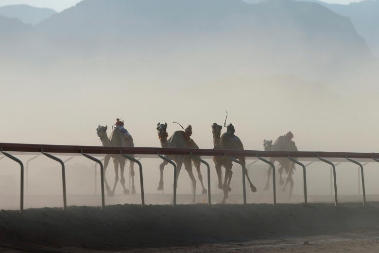 تصاویر | مسابقه دوی شترهای بیسوار در اردن