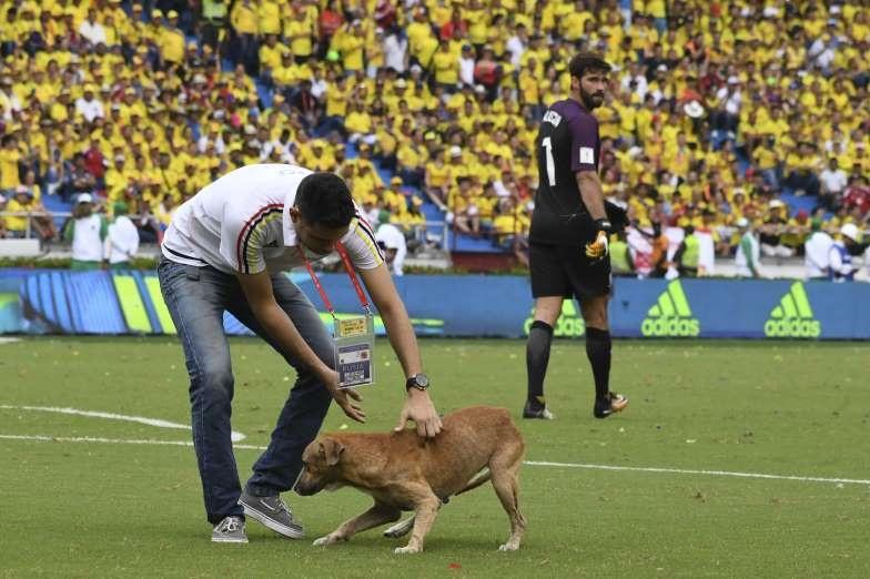 تصاویر | حیواناتی که وارد میادین ورزشی شدند