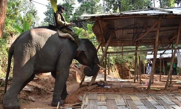 تصاویر | استفاده هندیها از فیل برای تخریب خانههای غیرقانونی