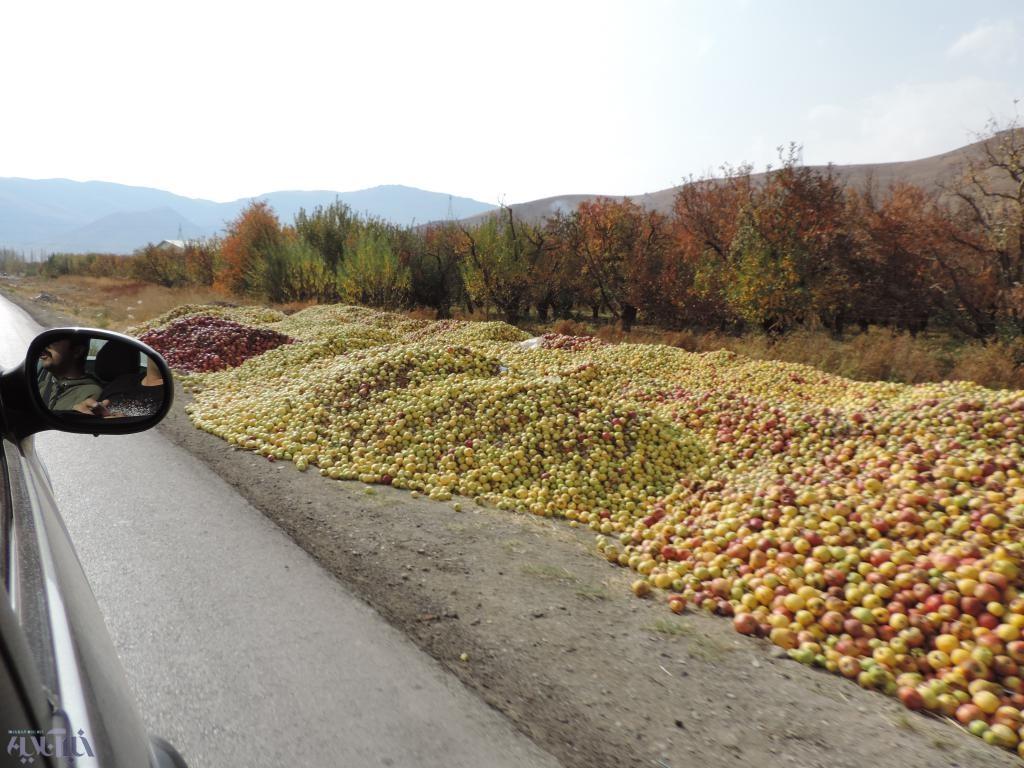 تراژدی غمناک سیب آذربایجانغربی