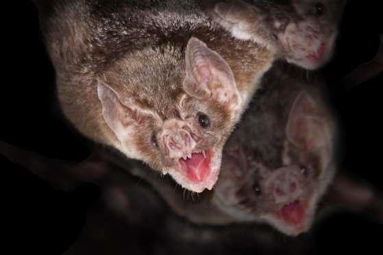 تصاویر | حیوانات بیآزاری که در ظاهر بسیار خطرناکند