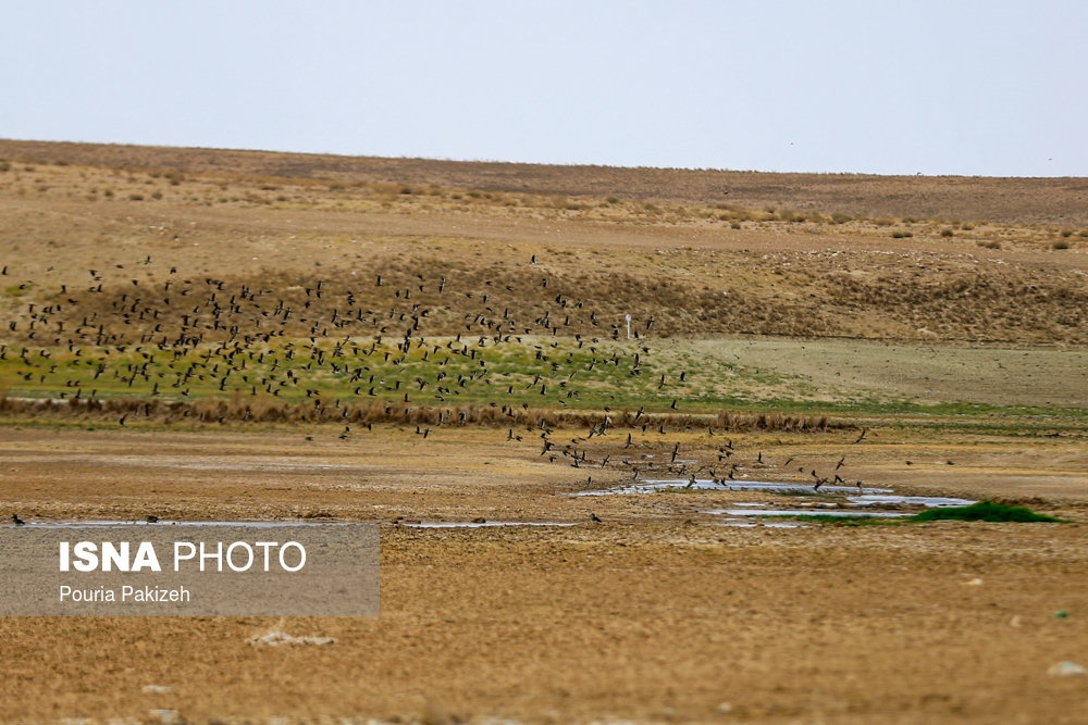 تصاویر | تالاب شیرینسو؛ پناهگاهی برای پرندگان در تمام فصول