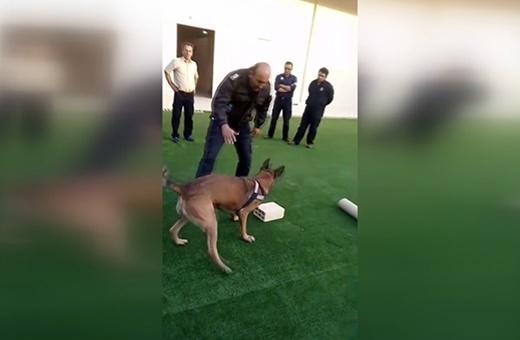 فیلم | نمایش دیدنی سگ موادیاب گمرک در کشف موادمخدر