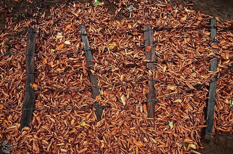تصاویر | سمفونی رنگها پاییزی در جنگلهای گیلان