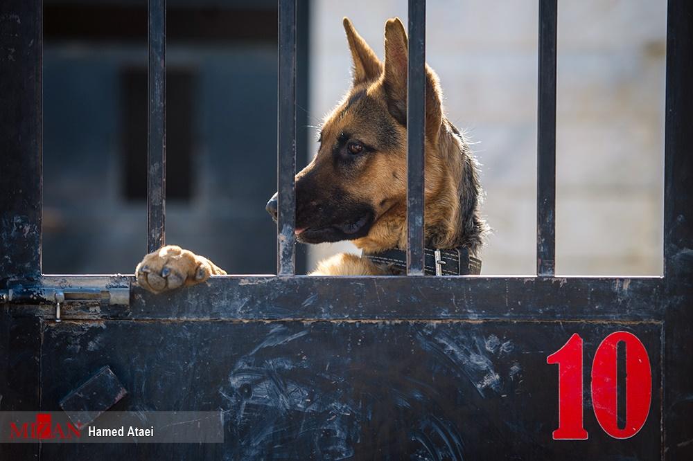 تصاویر   آموزش سگهای زنده یاب هلال احمر