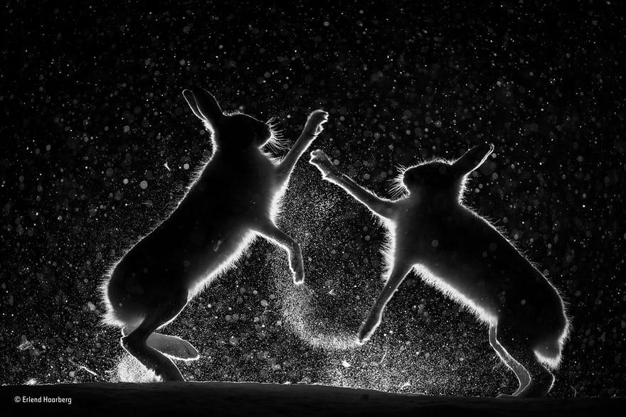 تصاویر | برگزیدگان مسابقه عکاسی حیاتوحش ۲۰۱۷