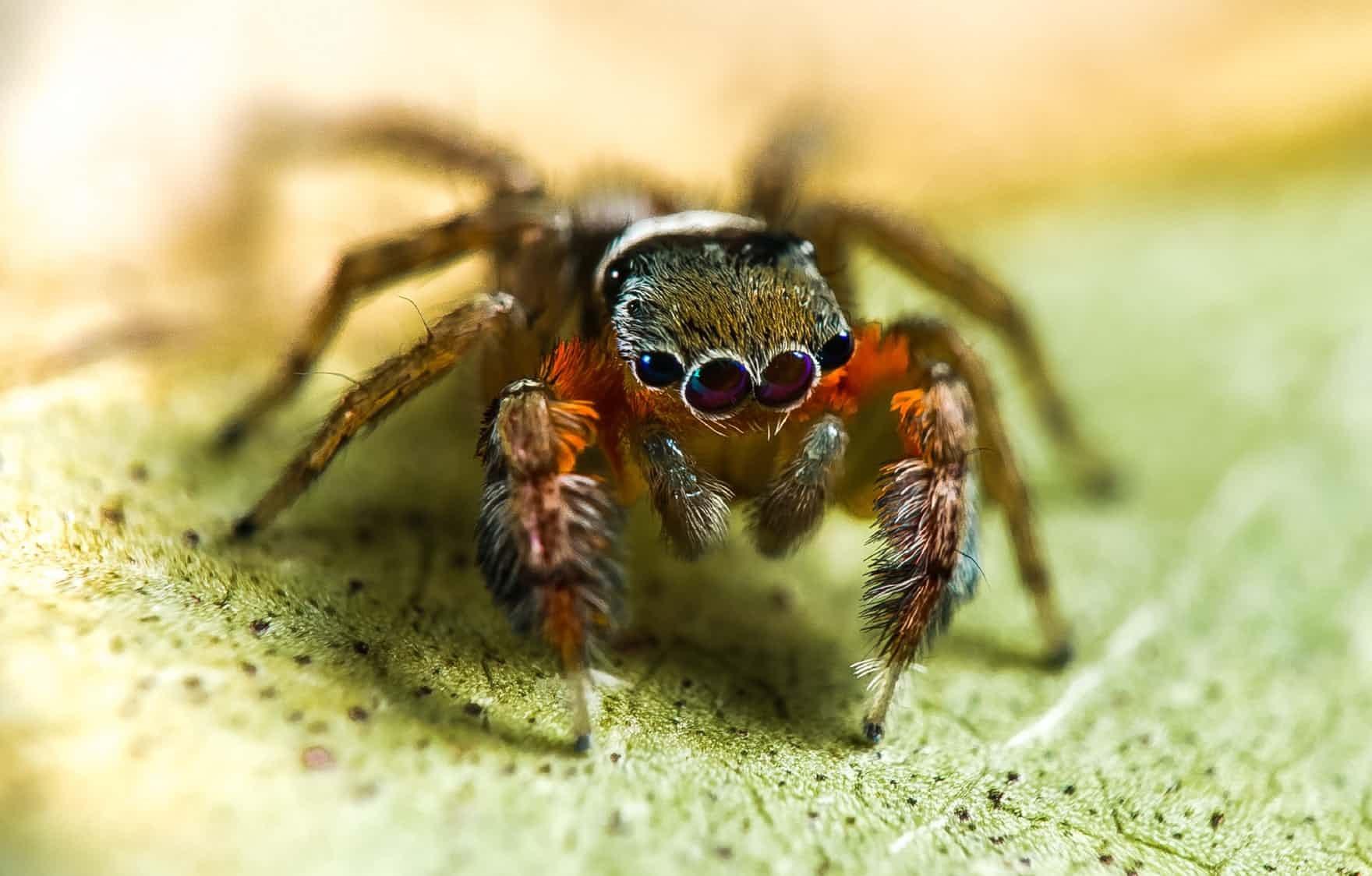 از آشنایی با شما خوشوقتم!/ مجموعه تصویری گاردین از گونههای جانوری شناسایی شده در سال ۲۰۱۷