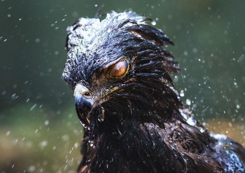 عکس | چشم عقاب در عکس روز نشنال جئوگرافیک