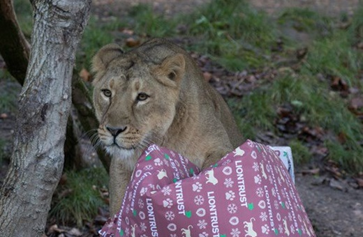فیلم   هدیه کریسمس برای حیوانات باغ وحش لندن