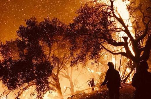 فیلم   سومین آتشسوزی بزرگ تاریخ آمریکا به جان جنگلهای کالی افتاد